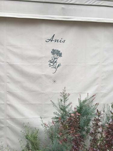 アニス・8.JPG
