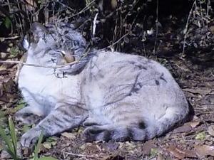 ジブリ・猫.jpg