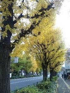 外苑銀杏並木.jpg