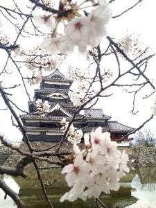 松本・桜.jpg
