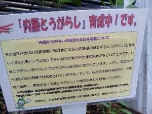 内藤・2.jpg